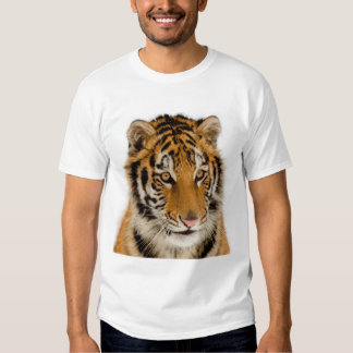 Cute Young Tiger Picture Tee Shirt