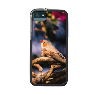Cute Zebra Finch On Twigs Cover For iPhone 5