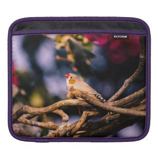 Cute Zebra Finch On Twigs Sleeve For iPads