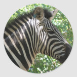 Cute Zebra Stickers