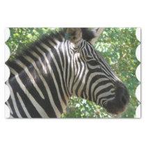 Cute Zebra Tissue Paper