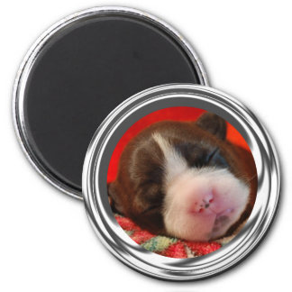 Cuteness de Terrier Imán De Nevera