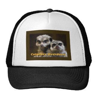 Cuteness Overdose! Trucker Hats