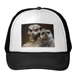 Cuteness Overdose! Hats