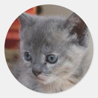 Cuteness Overload kitten stickers