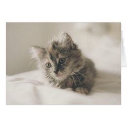 Cuteness therapy kitten thinking of you card