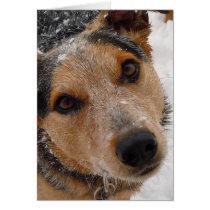 Cutest Australian Cattle Dog Christmas or Holidays Card