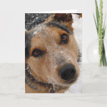 Cutest Australian Cattle Dog Christmas or Holidays Holiday Card