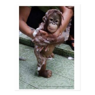 Cutest Baby Ever - Orangutan Orphan Post Cards