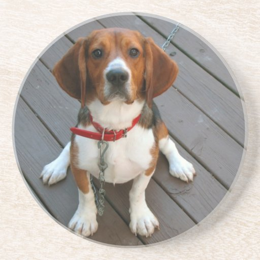 Cutest Beagle Dog Ever Drink Coasters