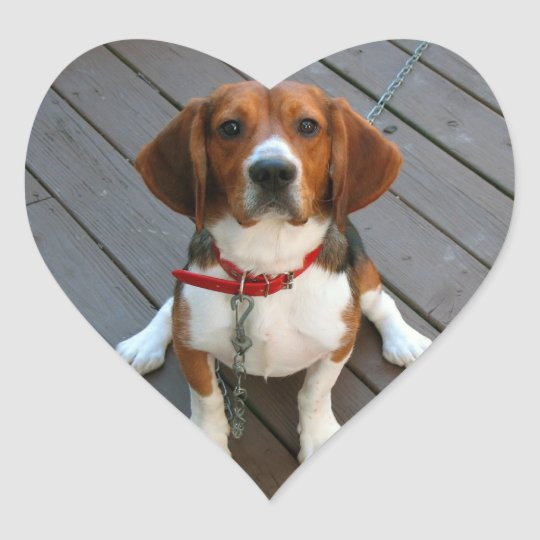 Cutest Beagle Dog Ever Heart Sticker