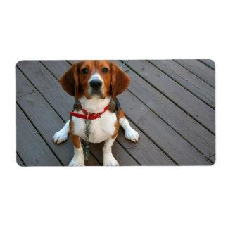Cutest Beagle Dog Ever Label