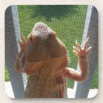 Cutest Bearded Dragon Photo Print Beverage Coaster