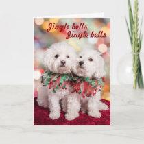 Cutest Bichon Frise dogs Christmas card