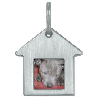Cutest_Blue_Staffy_Puppy,_Kennel_Dog_Tag Pet ID Tag