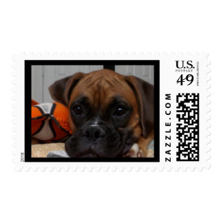CUTEST BOXER EVER STAMPS