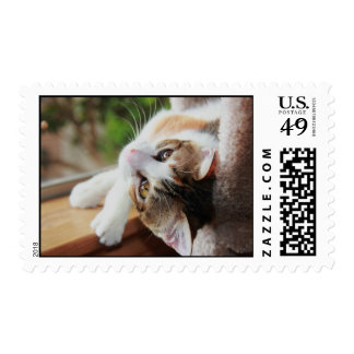 Cutest Calico Kitten in the World Postage