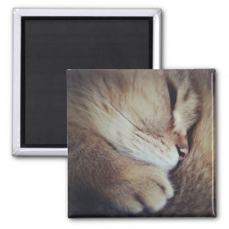 Cutest Cat 2 Inch Square Magnet