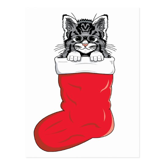 Cutest Christmas Kitten Postcard