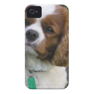 Cutest Dog In The World iPhone 4 Case