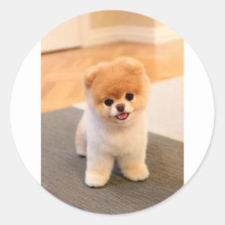 Cutest Dog in the world Classic Round Sticker