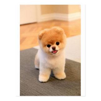 Cutest Dog in the world Postcard