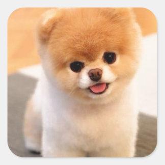 Cutest Dog in the world Square Sticker
