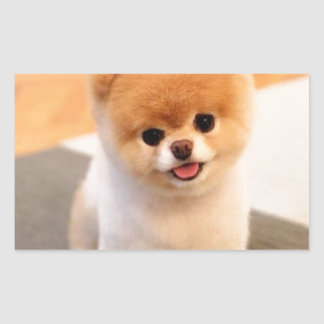 Cutest Dog in the world Rectangle Sticker
