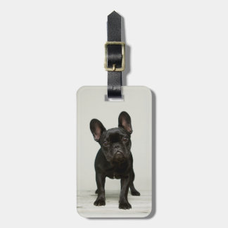 Cutest French Bulldog Puppy Bag Tag
