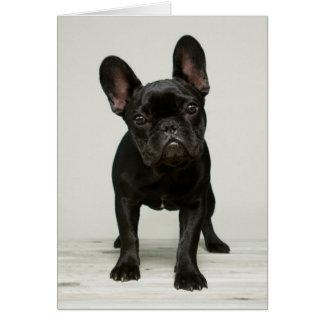 Cutest French Bulldog Puppy Card