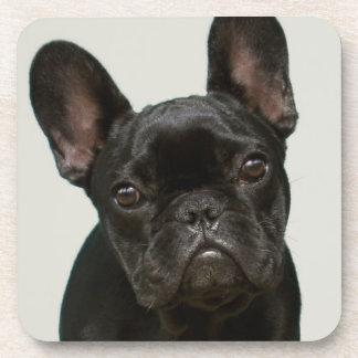 Cutest French Bulldog Puppy Drink Coaster
