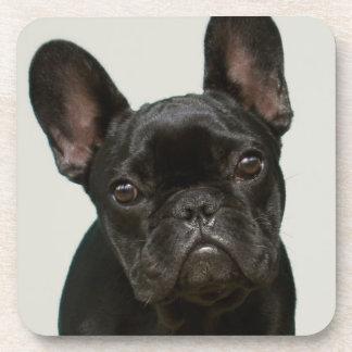 Cutest French Bulldog Puppy Drink Coaster