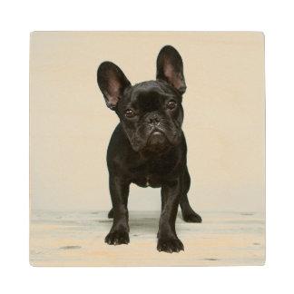 Cutest French Bulldog Puppy Wood Coaster