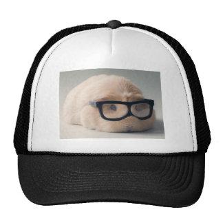 Cutest guinea pig wearing glasses trucker hat