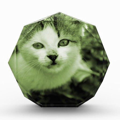Cutest Kitten ever Award
