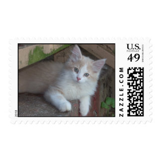 Cutest Kitten Ever -postage stamps
