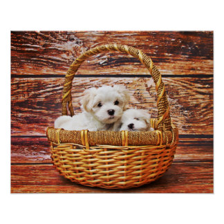Cutest Puppies Poster