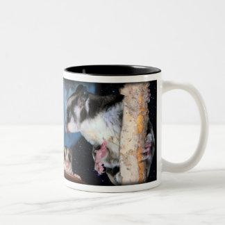 Cutest Sugar Gliders - moonbeams Two-Tone Coffee Mug