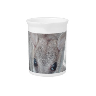 Cutest wallaby just staring at you and eating beverage pitcher
