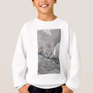 Cutest wallaby just staring at you and eating sweatshirt