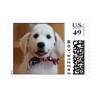 Cutest white puppy on a stamp