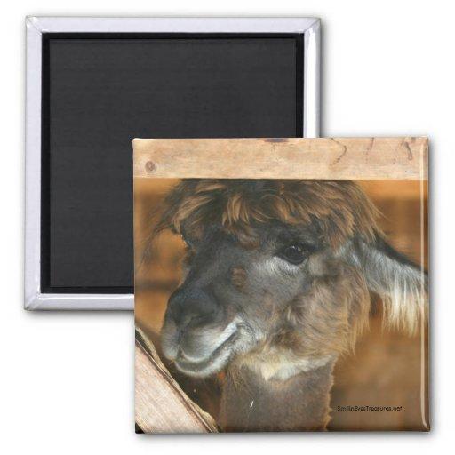 Cutey Llama Farm Animal Photography Magnet
