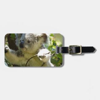Cutie de la koala etiquetas bolsa