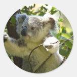 Cutie de la koala etiqueta redonda