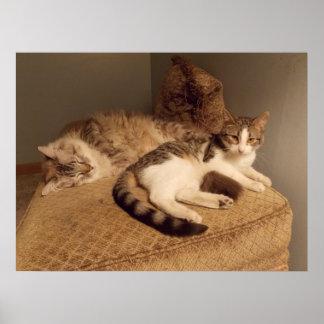 cutie kitties Poster