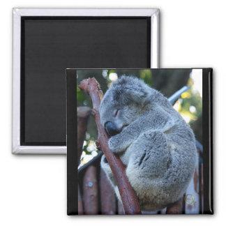 Cutie Pie Koala 2 Inch Square Magnet