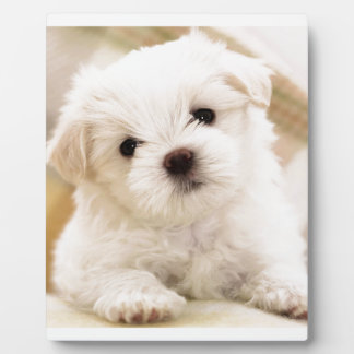 Cutie Pie Puppy Plaque