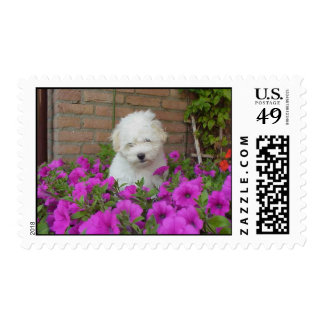 Cutie Postage Stamps