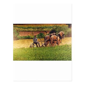 Cutting Hay Postcard