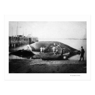 Cutting up a Blue Whale in Alaska Photograph Postcard